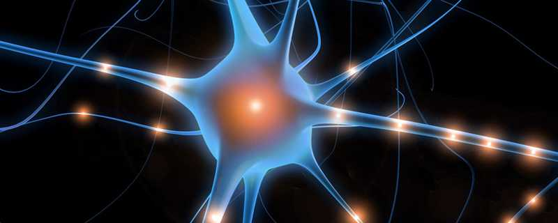 plasticidade cerebral
